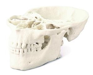 01monochrome_Medical_Skull_Model_300px